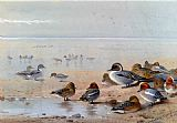 Archibald Thorburn Pintail Teal And Wigeon On The Seashore painting